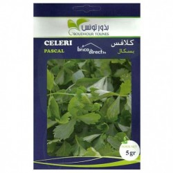 Graines semis Celeri Pascal كلافس