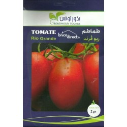 Graines semis Tomates Rio Grande طماطم