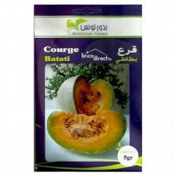 Graines semis Courges Batati قرع بطاطي