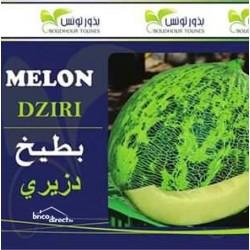 Graines semis Melon Dziri بطيخ دزيري
