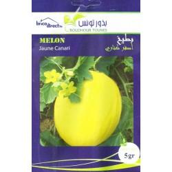 Graines semis Melon Jaune Canari بطيخ أصفر كناري